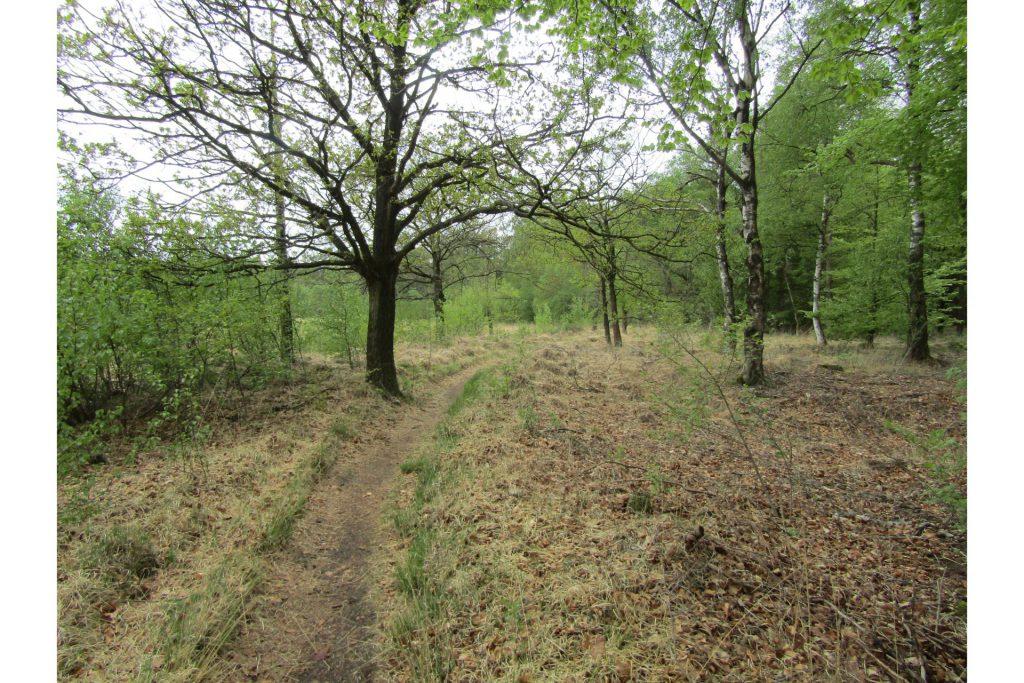 Een leuk pad langs een bos en een stuk heide.
