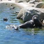 De zeehonden