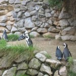 De pinguins