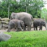 De olifanten