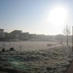 Wit grasveld (2)