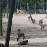 De savanne