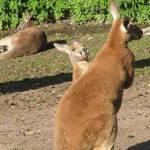 Le Parc Zoologique Cerza (3)