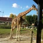 Le Parc Zoologique Cerza (10)