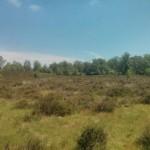 Heidelandschap (2)