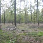 Het naaldbos