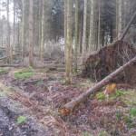 Storm in het bos