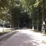 Mooie Bosweg
