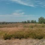 Heidelandschap (3)
