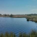 Heidelandschap (4)