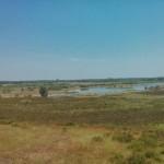 Heidelandschap (6)