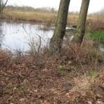 Bomen en water (1)