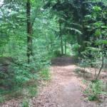 Een fraai bospad