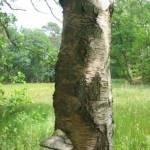 Paddestoelen op een dode boom