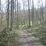 Bos en akkerland (1)