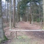Een leuk bospad