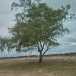 In het Balloërveld staat ook nog deze eenzame boom.