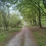 Op een gegeven moment volgden wij deze bosweg.