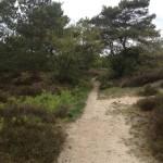In het Nationaal Landschap Drentsche Aa vind je dit paadje.