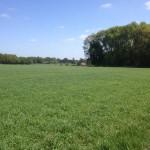 Een fraai uitzicht over een veld met wat bos ernaast.