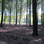 Een heel fraai bos (4)