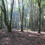 Een heel fraai bos (5)