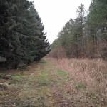 Een klein stukje naaldbos in het Horsterwold