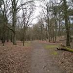 Zo zonder bladeren zijn de bomen in het bos ook erg mooi.