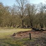 Een best wel grote groep hertjes die in de beschutting van wat kale bomen lekker aan het grazen waren.