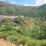 In dit gedeelte van Portugal wordt heel veel gras geteeld via terrasbouw.