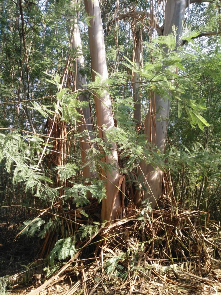 Fraaie bomen die je tegenkomt tijdens het wandelen van de blauwe stippen wandeling vanaf Camping Toca Da Raposa.