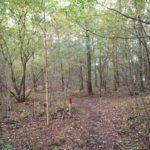 In het eerste gedeelte van de wandeling volgden wij dit mooie bospad.