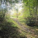 Ook dit bospad was zeer fraai.