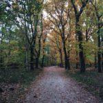 Een wat groter bospad omrand door fraaie bomen met de stille getuigen van de ingeslagen herfst.