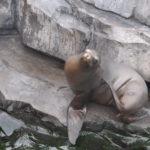 Deze Zeeleeuw was zich zeer relaxt aan het krabben.