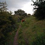 Schotse Hooglanders waren in het gebied aan het grazen. Deze zelfs op het pad.