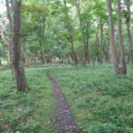 Ook dit is nog een mooi stuk bos waar de wandeling door heen ging.