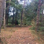 De wandeling ging door hele mooie bossen. De herfst is al begonnen.