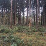 Ook langs dit stukje dicht bos kwamen wij.