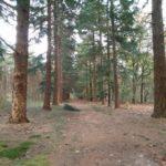 Hoe mooi bos kan zijn, bewijst deze foto wel.