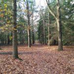 Hoe mooi bos kan zijn ...