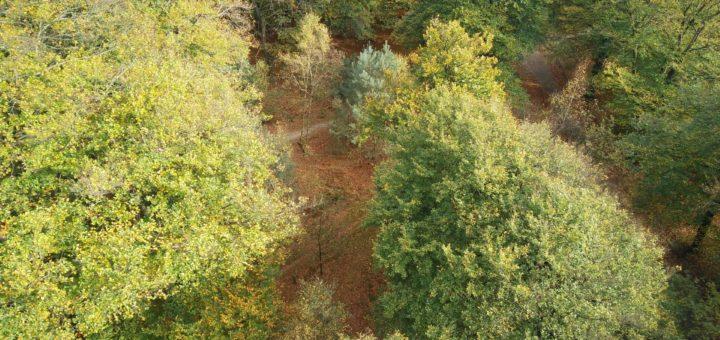 Vanaf uitzichttoren De Kaap had je dit hele fraaie uitzicht op het bos beneden.