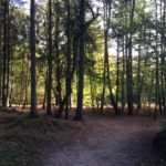 Mooie lichtval in het bos.