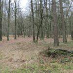 Een mooie stukje bos.