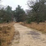 Dit was ook een leuk pad. Langs heide en door bos.