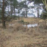 Ook hier in het bos waren er ondergelopen gebieden.