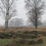 Hoe mooi wil je het hebben? Heide en een paar bomen en veel wazigheid door de regen in de lucht.
