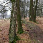 Over dit hele leuke bosweggetje liep de wandeling ook.
