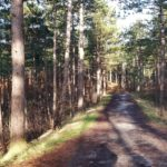Dit is een heel mooi bospad.