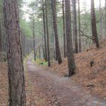 Dit hele mooie bospad was onderdeel van de wandeling.